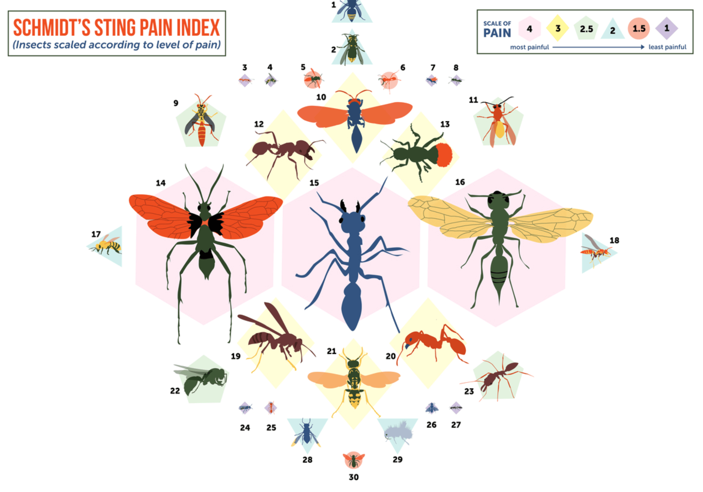pain of insects ranking infographic